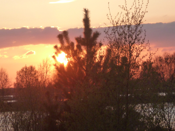 Emsland-Sonne-Kiefer-5-600