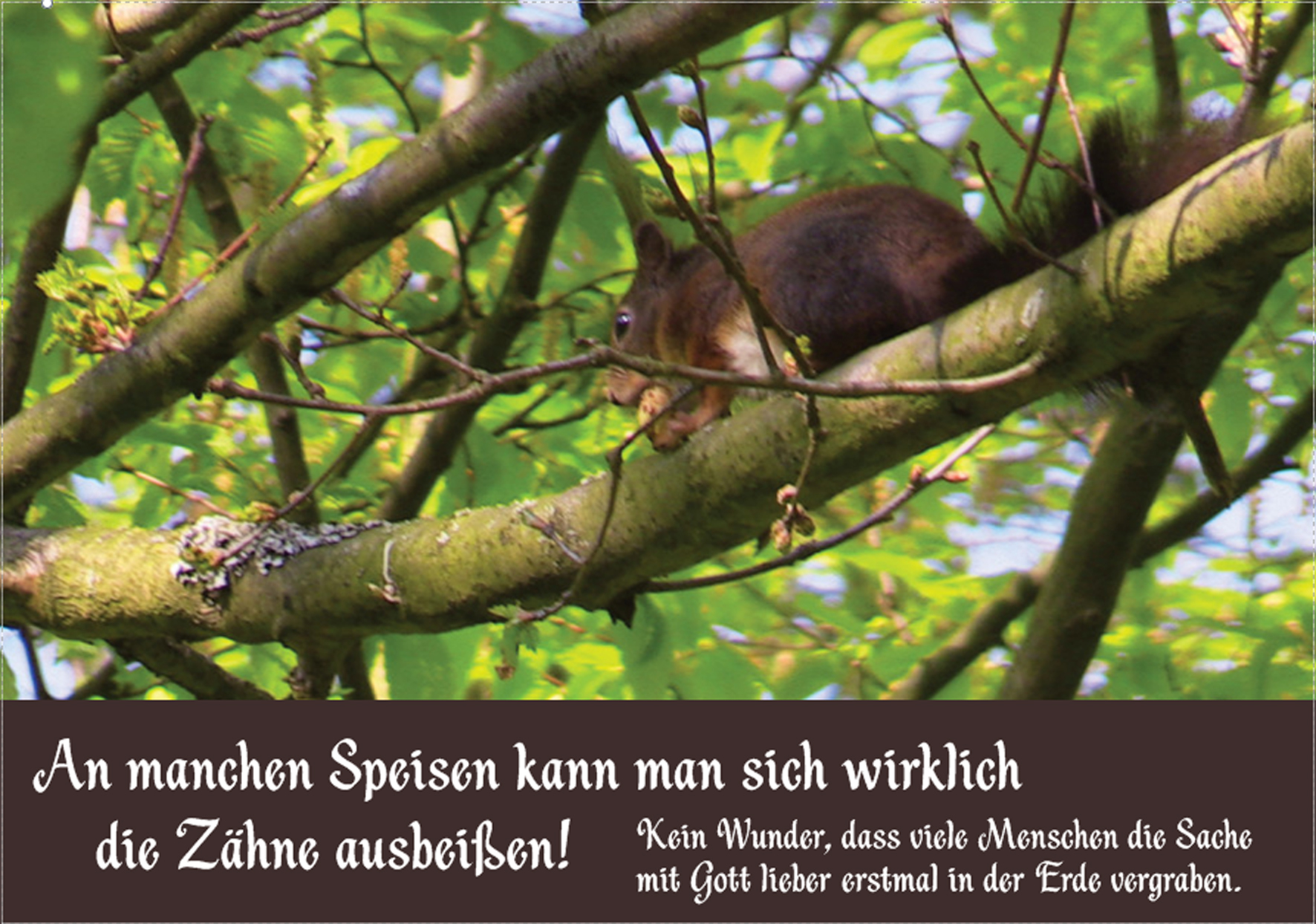 Eichhoernchen-spruch-ideesamkeit-300